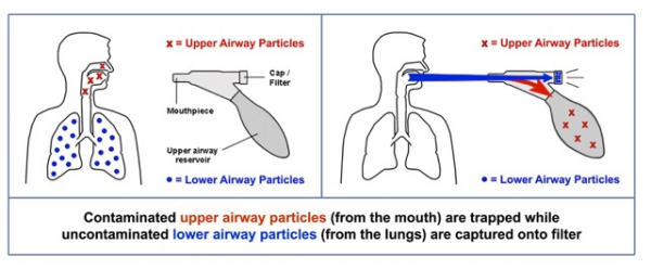 Alveolar Breath Separation and Collection Device