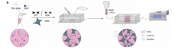 High-Throughput MSC Potency Assay to Bring Feasibility to Immune/Inflammatory Therapeutics