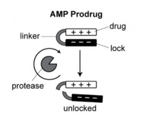 Self-Titrating Bacterial Protease-Activated Prodrug