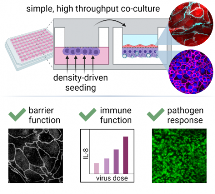 Scalable, Low-Cost, Inversion-Free Method of Enabling Automated Underside Cell Seeding