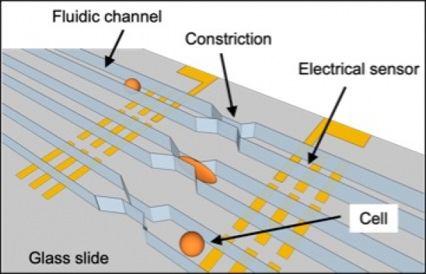 Scalable Microfluidic Device with Multiple Constriction Channels for High-Throughput Mechanophenotyping